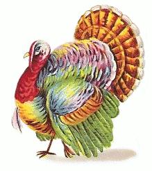 turkey_colorful