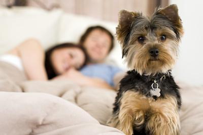 Is Pet Dander Circulating Through Your Ventilation System?